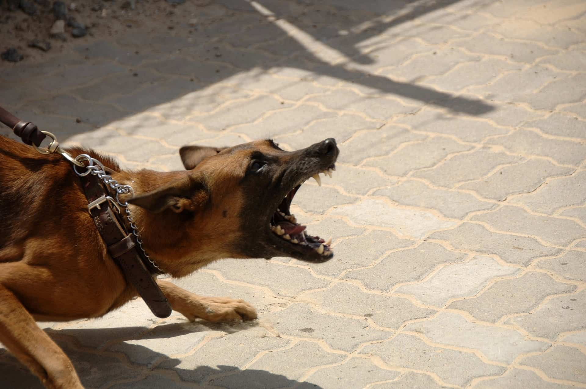 My Dog snarling is lunging and snapping at other dogs. A post from Reddit: