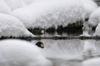 skorec vodní Cinclus cinclus, foto M. Truhlář™