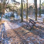 lavička v lesíku