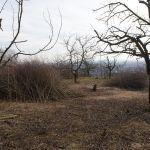 Neprostupná džungle zmizela a zůstaly jen vybrané stromy a keře