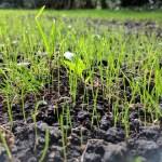 Dénes Kert fű - Füvesítési munkálatok - előkészítés