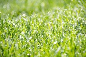 grass 1326759 1280 - grass-1326759_1280