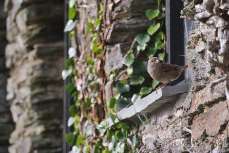 kuşların şarkısı