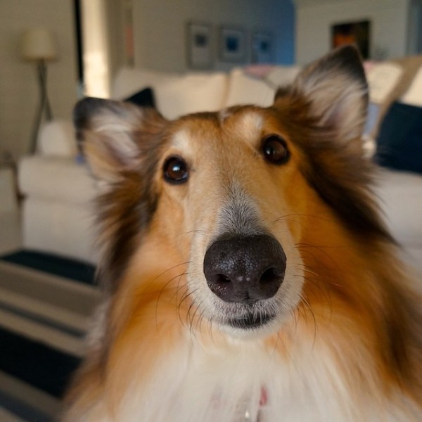 Hjernegymnastik for hunde