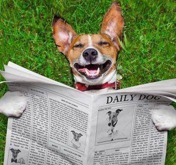 Hunde nyheder, Den Glade Hundeskole