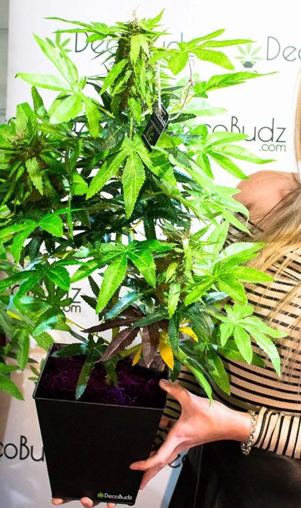 DecoBudz Kush Artificial Cannabis Marijuana Hemp Plant 25-30 inches Tall