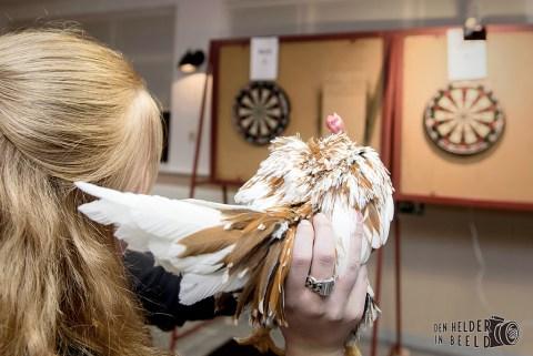 darten vogelasiel