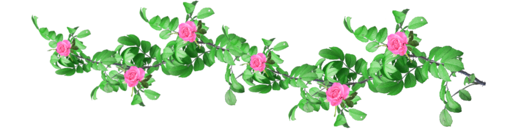 rose_garland__1_png_stock_by_amalus-d2p1xe0