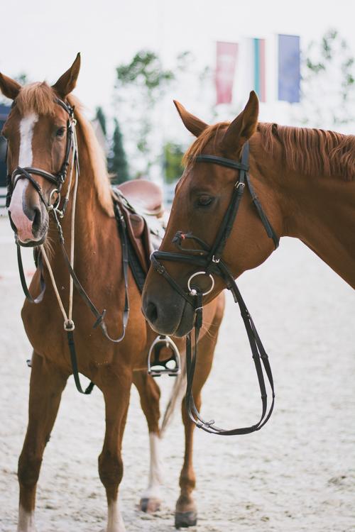 Trakietz horses