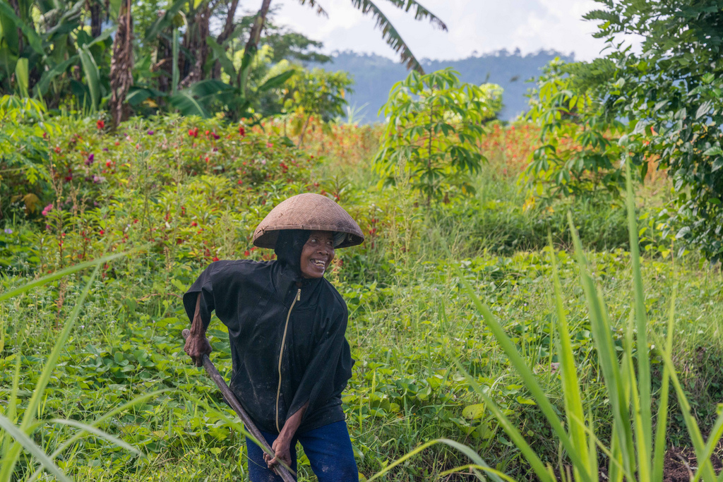 Bali worker harvesting sweet potatoes. She turned out to be the aunt of our local guide.