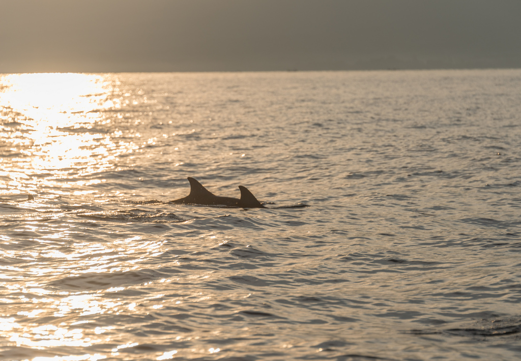 We spotted dolphins just after sun-up.