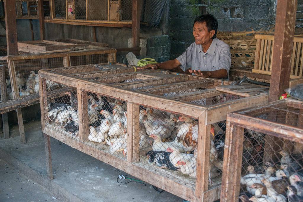 Typische scène op een lokale markt - vee te koop ...