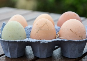 Proper free range eggs the way they should look for sale - all different sizes, colours and unwashed - sold by the local farm at The Lizard