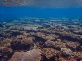 Snorkelling at Coral Bay, Western Australia