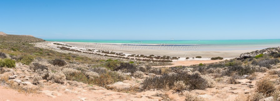 A beach close to Denham, Shark Bay - Western Australia
