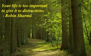 No distractions robin sharma