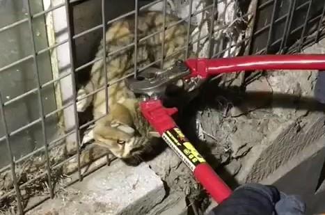 Kafası tellere sıkışan kedinin imdadına itfaiye yetişti