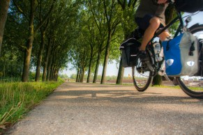 bike-in-tunnel-of-trees