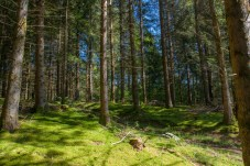 moss-carpeted-forest