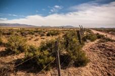 fences-for-the-llamas