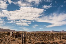 llamas-fenced-in