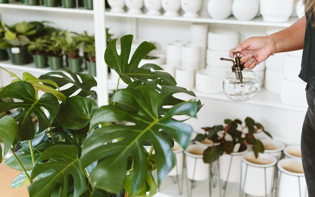 Basic Indoor Plant Selection & Winter Care Featuring DIY Moss Pole Demo