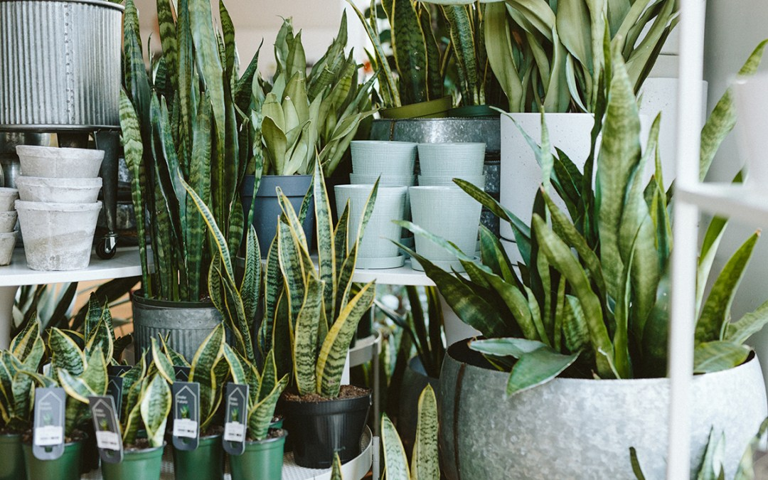Basic Indoor Plant Propagation