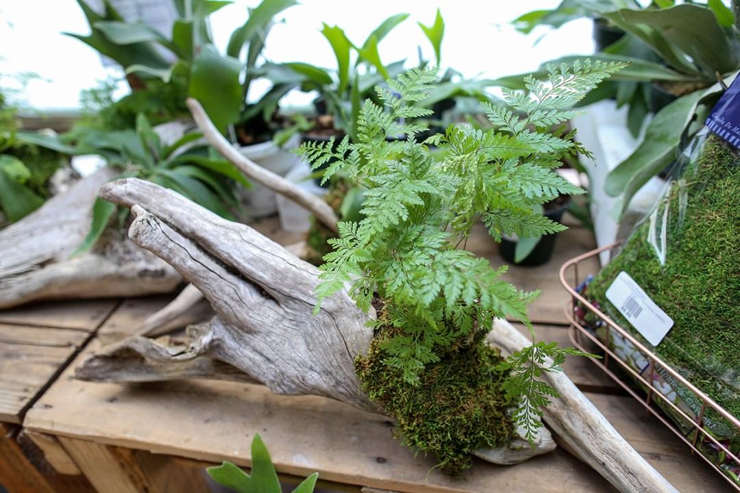 DIY Wood Mounted Plants