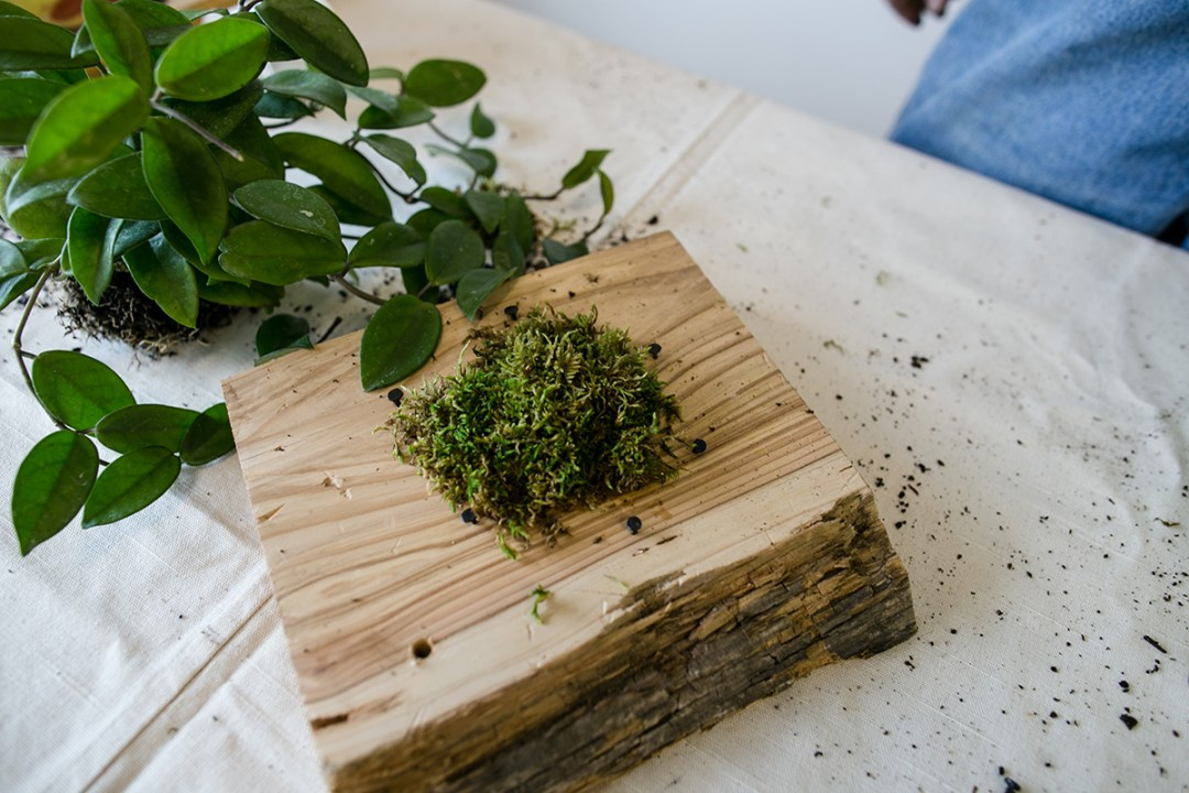 Mounting Plants to Wood