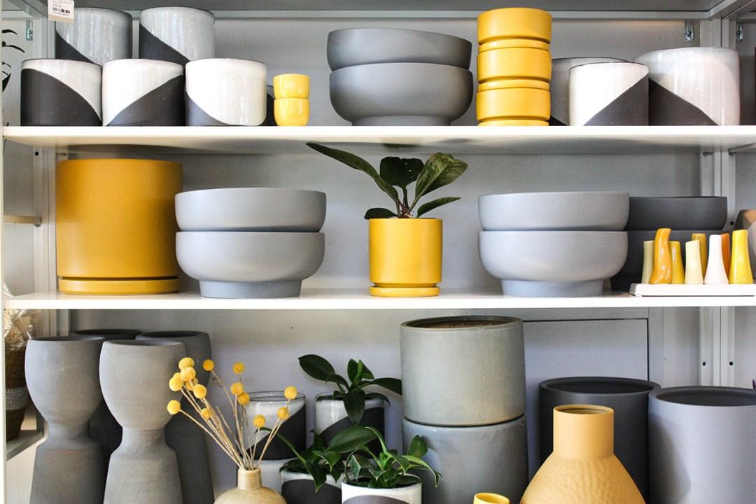 Pantone Colors for Houseplants Momma Pots