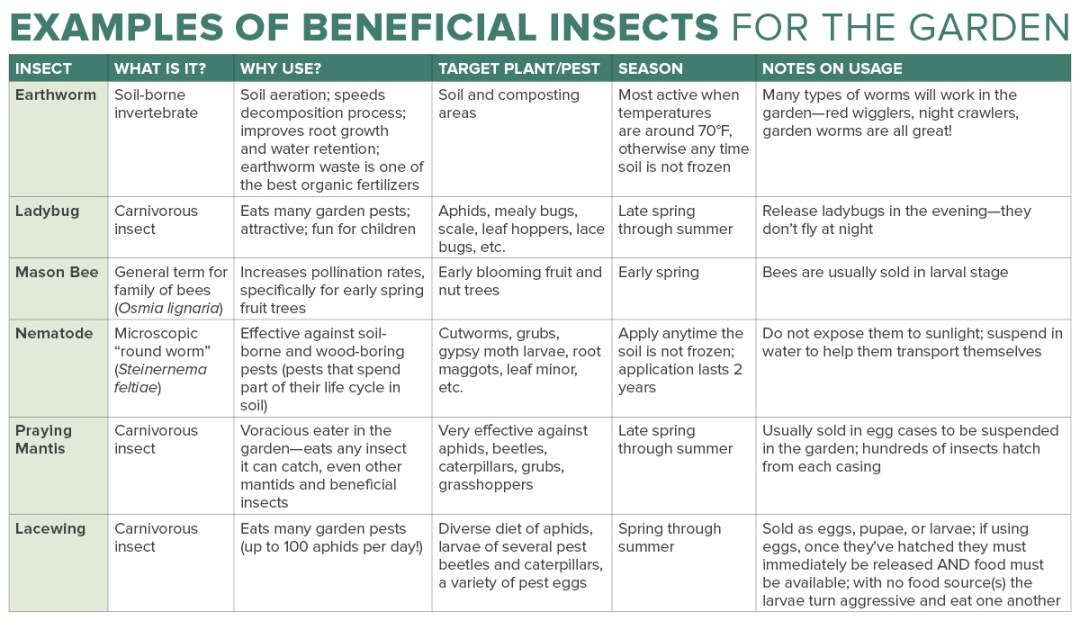 Beneficial Insects in the Garden Chart