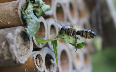 Creating a Habitat for Bees in Your Garden