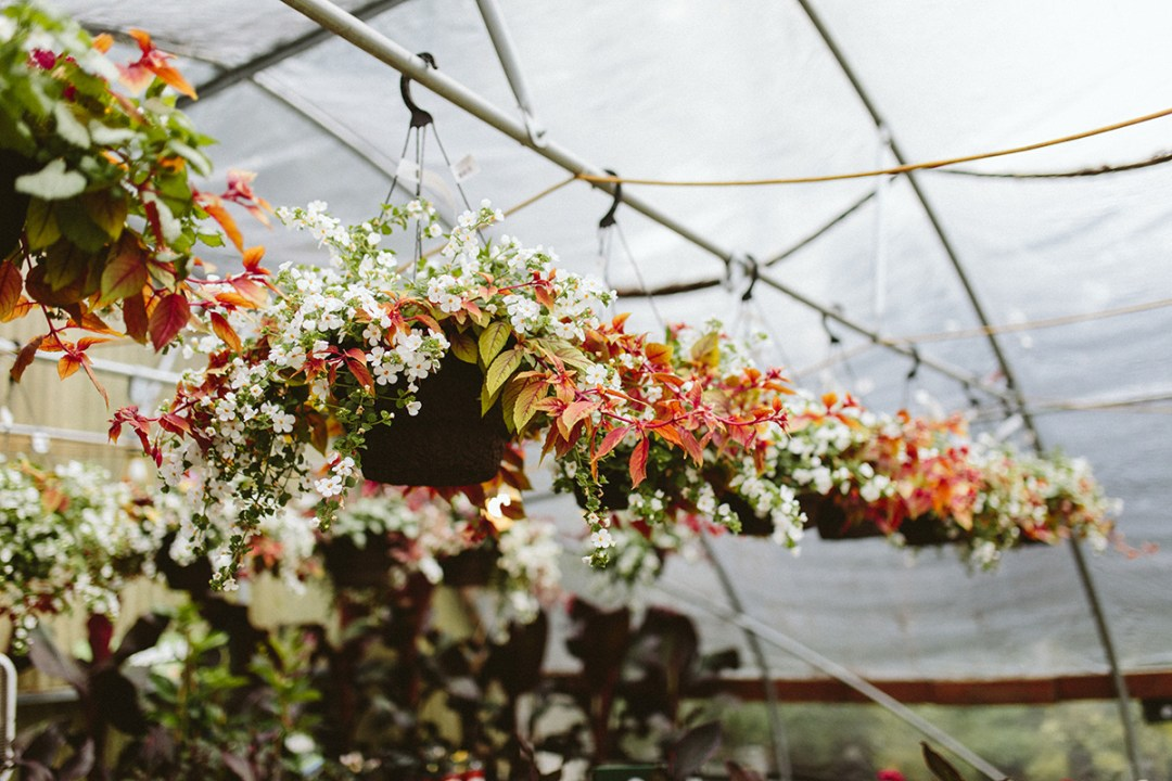 Hanging Baskets for Mother's Day
