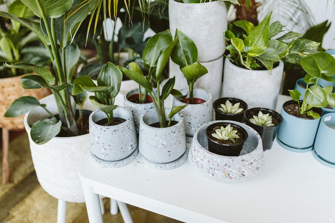Houseplants for mother's day