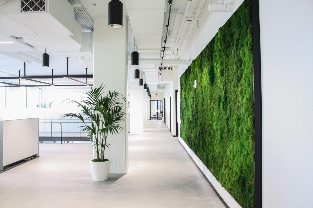 Moss Wall and Palm in an office
