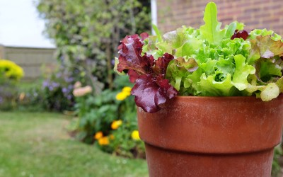 How to Grow Edible Plants in Containers