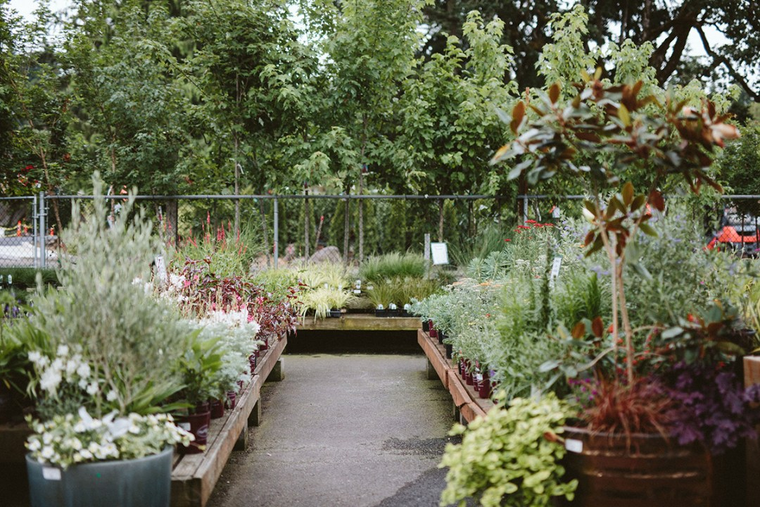 Photo of trees and shrubs at our garden center