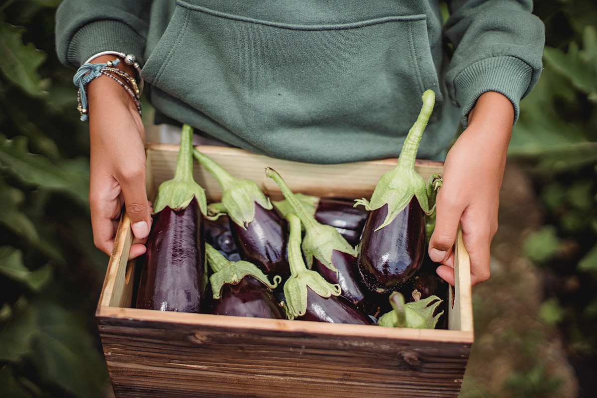 holding a box of fresh eggplants