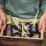 holding a box of fresh eggplants