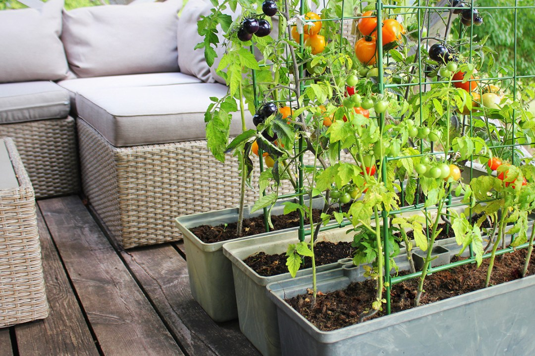 Show how you can grow plants on a Patio