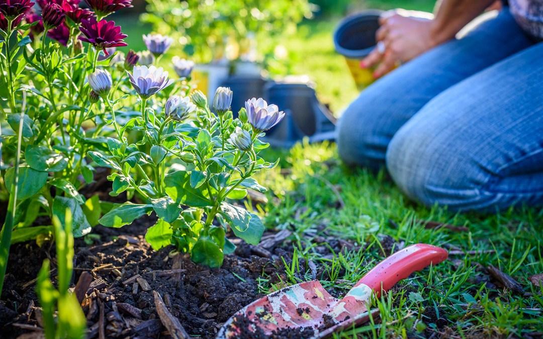 gardener planting flowers in the ground