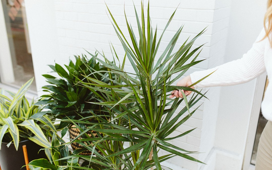 Our 7 Favorite Easy Care Houseplants