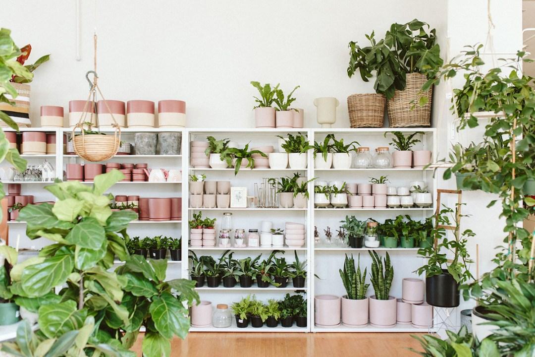 Bridgeport Village Plant Shop