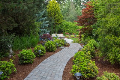 paved pathway surrounded by plantings