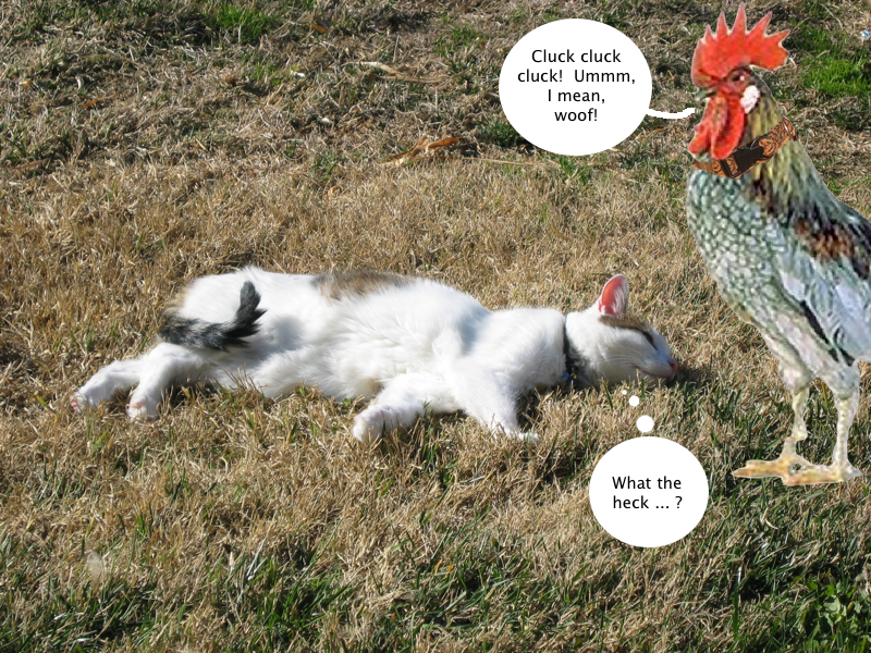 trouble_meets_tucker_chicken