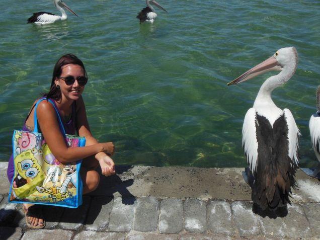 Pelikan Australien