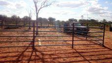 Rindergehege