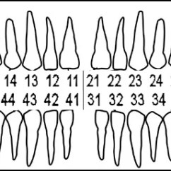 Diagram Of Mouth With Teeth Numbers Electrical Control Wiring Tooth And Illustrations Alternate Numbering System
