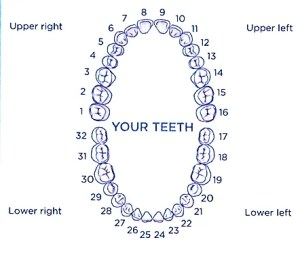 Tooth Numbers and illustrations