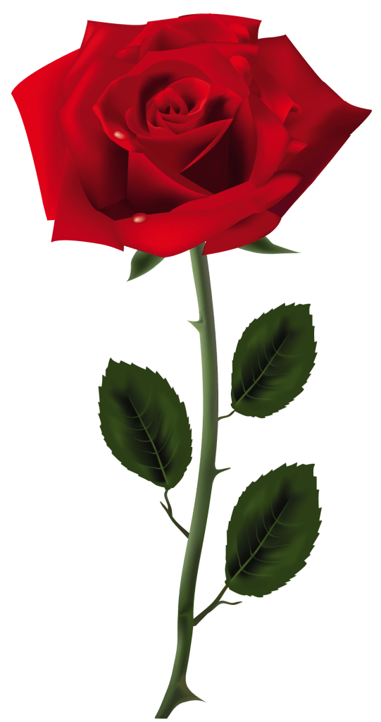 Rose-Free-Download-PNG